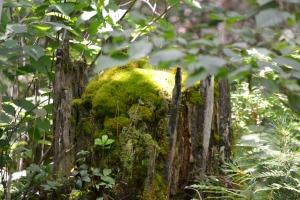 Texture - moss 2