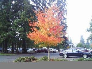 maple-tree/writing essential challenge