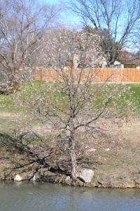 tree bud 2