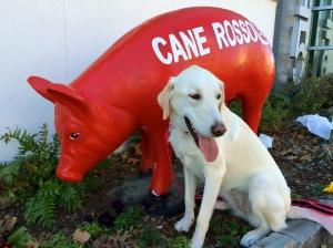 Sugar and red pig