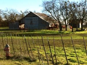 Farm 820 horses
