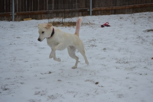 Sugar jumping in snow