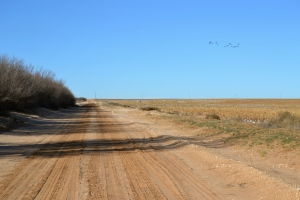 West Texas Dirt Road