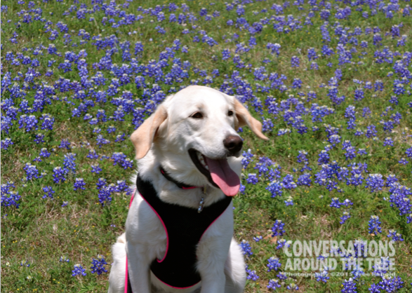 Sugar in the bluebonnets