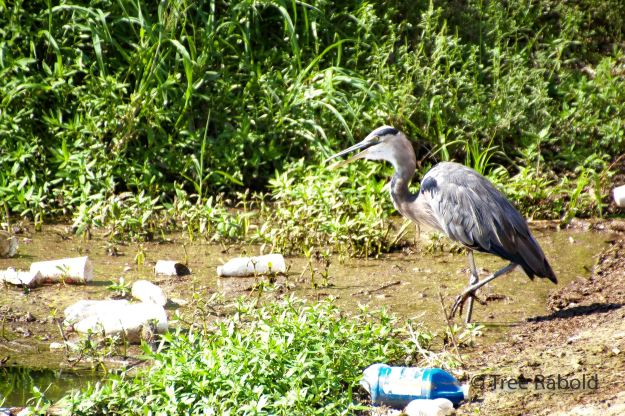 heron trash